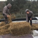 installing green roof
